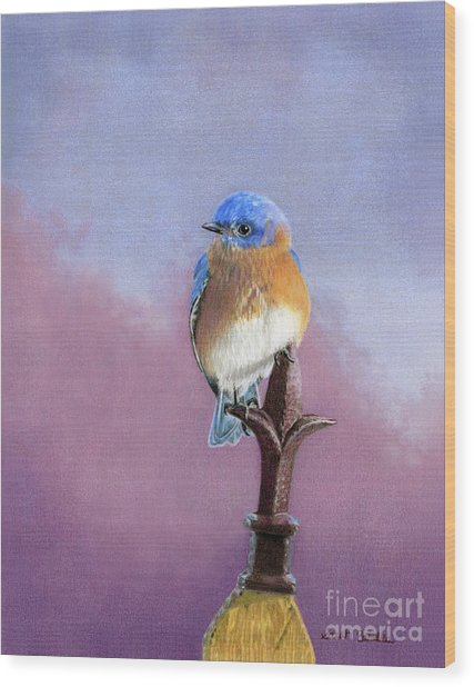 Backyard Bluebird Wood Print