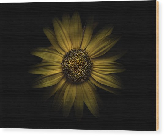 Wood Print featuring the photograph Backyard Flowers 18 Color Version by Brian Carson