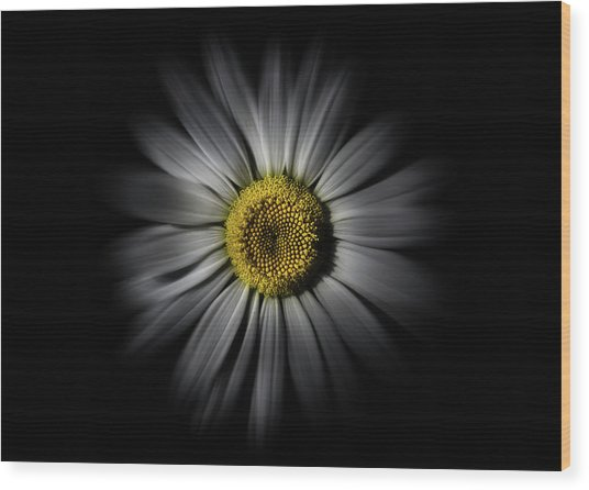 Wood Print featuring the photograph Backyard Flowers 52 Color Flow Version by Brian Carson