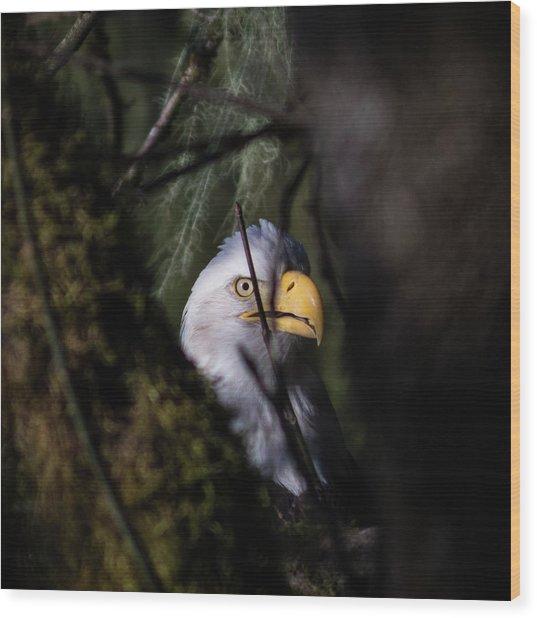 Bald Eagle Behind Tree Wood Print