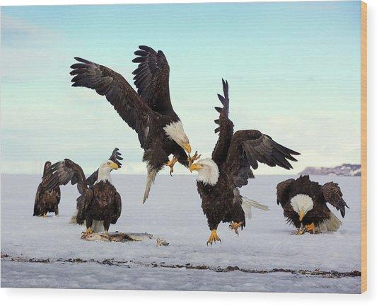 Bald Eagle Fight Wood Print