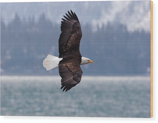 Bald Eagle In Action Wood Print by Mark Miller Photos