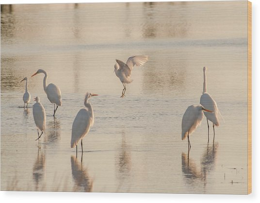 Ballet Of The Egrets Wood Print