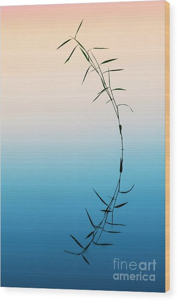 Bamboo Grass Reflection Wood Print by Tim Gainey