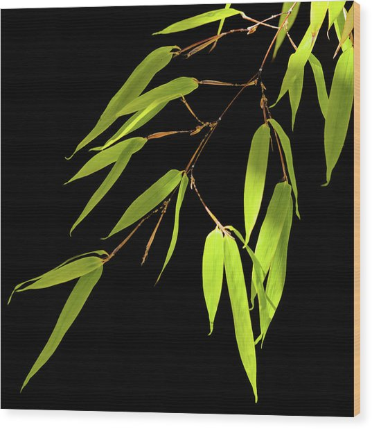 Bamboo Leaves 0580a Wood Print