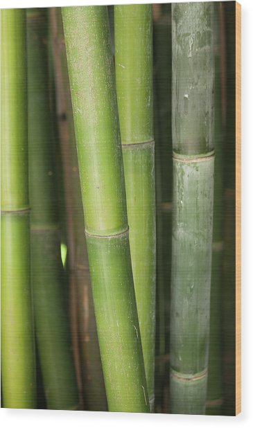 Bamboo Stalk 4057 Wood Print