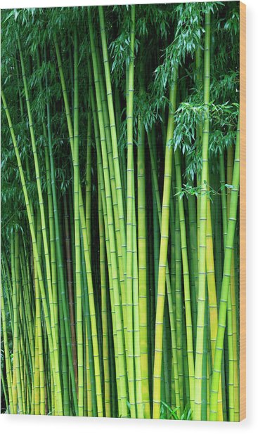 Bamboo Trees Wood Print