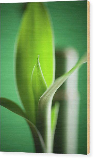 Bamboo Wood Print by Willselarep