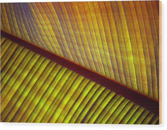 Banana Leaf 8603 Wood Print