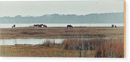 Wood Print featuring the photograph Band Of Wild Horses At Sinepuxent Bay by Bill Swartwout Fine Art Photography