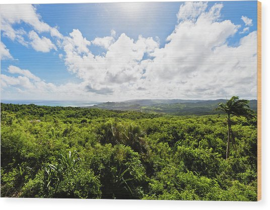 Barbados Hinterland Wood Print by Flavio Vallenari