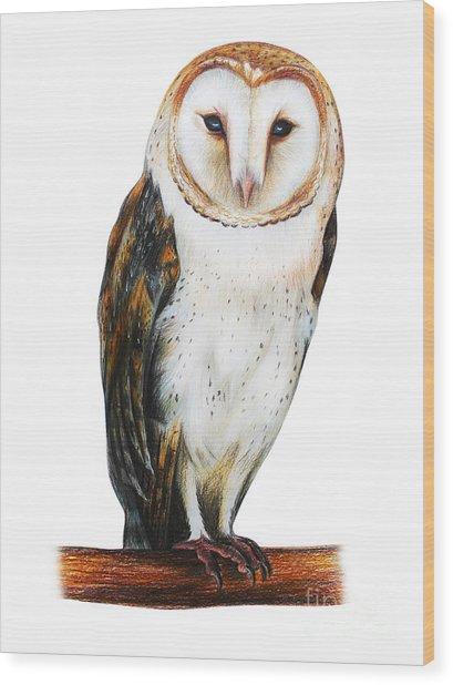 Barn Owl Drawing Tyto Alba Wood Print