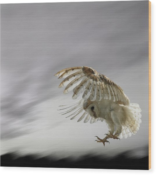 Barn Owl Flying Against And Overcast Sky Wood Print by Digital Zoo