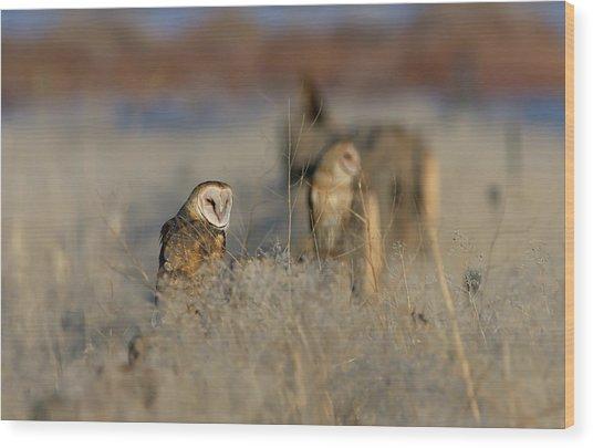 Barn Owls 9 Wood Print