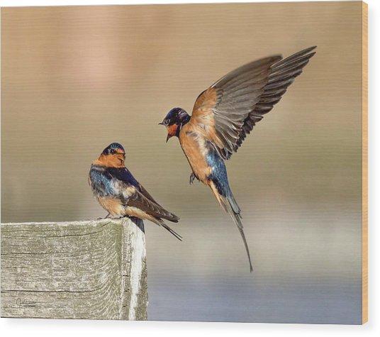 Barn Swallow Conversation Wood Print