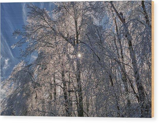 Bass Lake Trees Frozen Wood Print