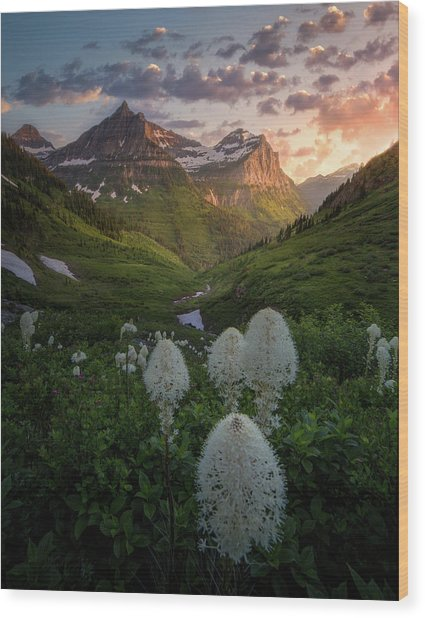 Bear Grass Bloom / Highline Trail, Glacier National Park  Wood Print