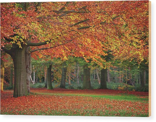 Beautiful Autumn In Park Wood Print by Lorado