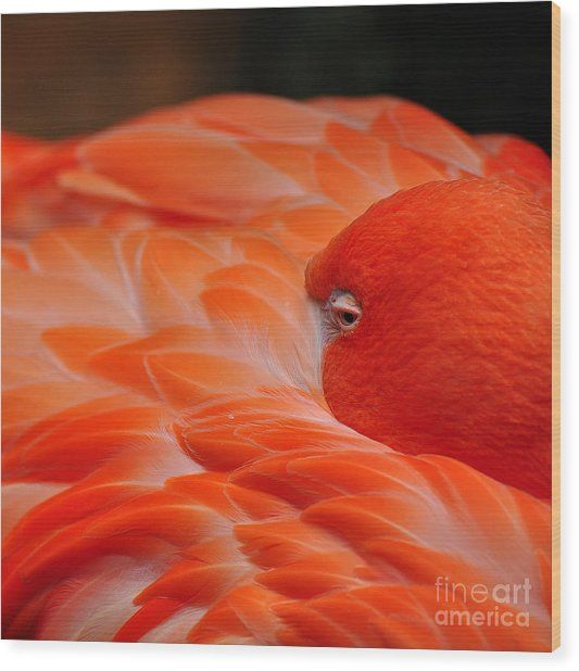 Beautiful Flamingo Wood Print