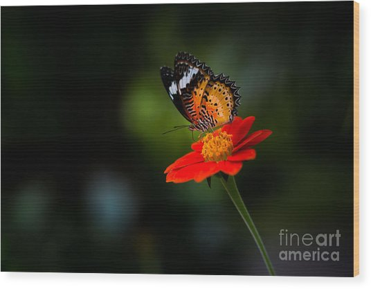 Beautiful Flower And Butterfly Wood Print