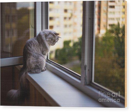 Beautiful Grey Cat Sitting On A Wood Print