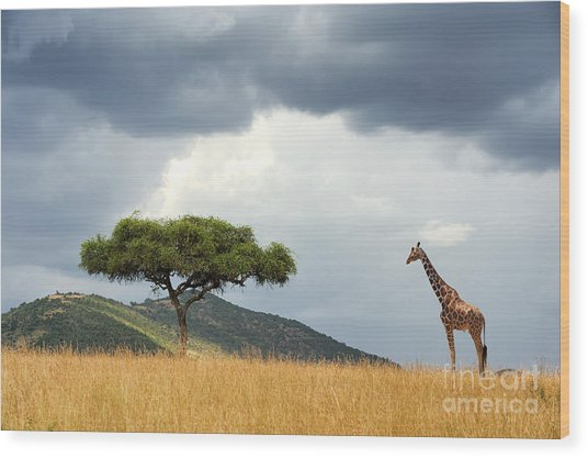 Beautiful Landscape With Nobody Tree Wood Print