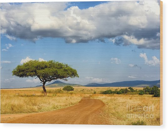 Beautiful Landscape With Tree In Africa Wood Print