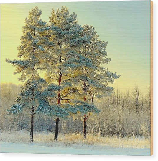 Beautiful Landscape With Winter Forest Wood Print