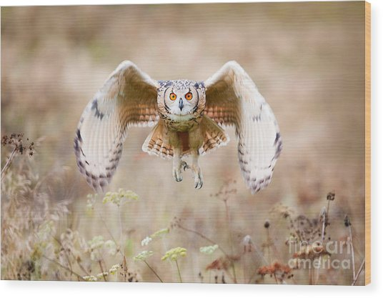 Beautiful Owl Photographed While Wood Print