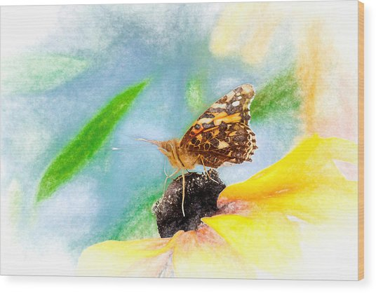 Beautiful Painted Lady Butterfly Wood Print