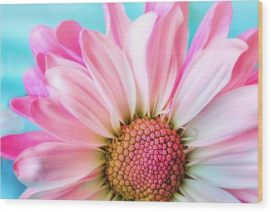 Beautiful Pink Flower Wood Print