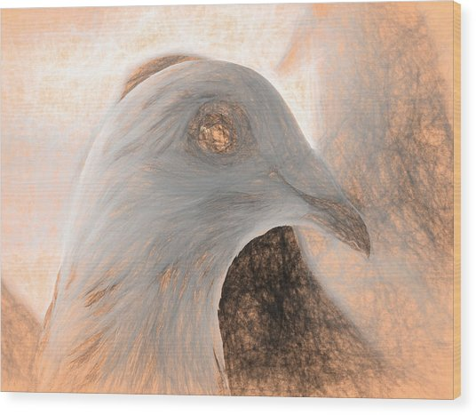 Beautiful Racing Pigeon Da Vinci Wood Print