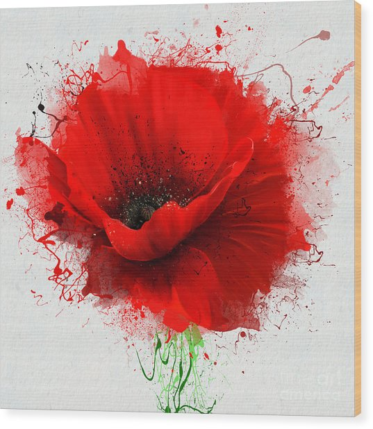 Beautiful Red Poppy, Closeup On A White Wood Print