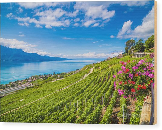 Beautiful Scenery With Rows Of Vineyard Wood Print