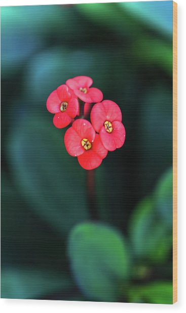 Beautiful Summer Flowers Wood Print