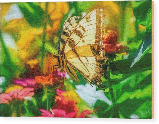 Beautiful Swallow Tail Butterfly Wood Print