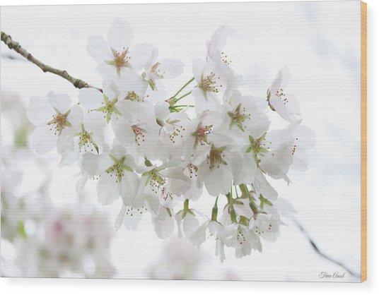 Beautiful White Cherry Blossoms Wood Print