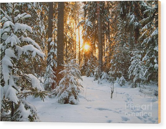 Beautiful Winter Landscape With Sunset Wood Print