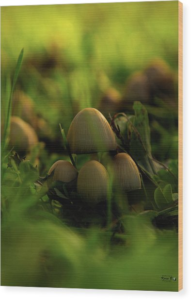 Beauty Of Fungus Wood Print