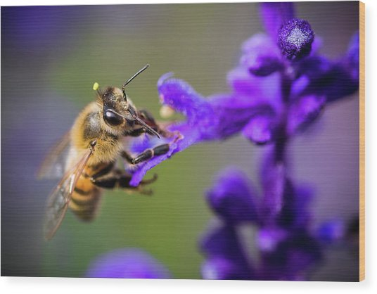 Bee On A Purple Flower Wood Print