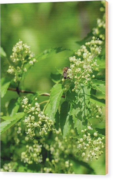 Bee On Amur Maple 1 Wood Print