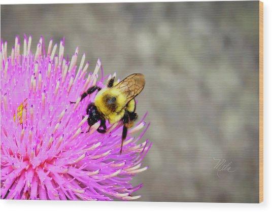 Bee On Pink Bull Thistle Wood Print