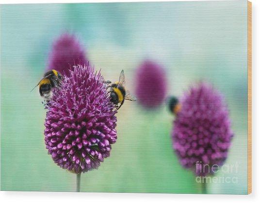 Bees On Allium Sphaerocephalon.  Allium Wood Print