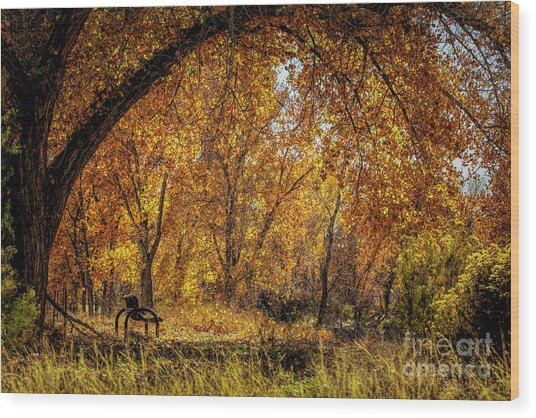 Bench With Autumn Leaves  Wood Print