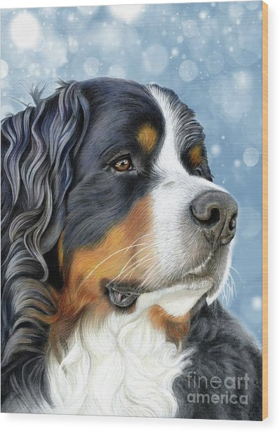Wood Print featuring the mixed media Bernese Arctic Blue by Donna Mulley