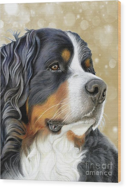 Wood Print featuring the mixed media Bernese Old Gold by Donna Mulley