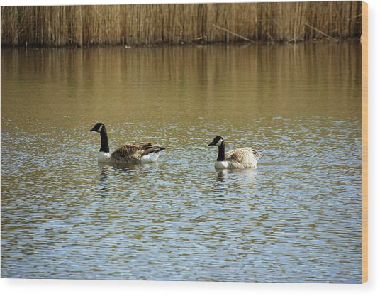 Bidston.  Bidston Moss Wildlife Reserve. Two Geese. Wood Print