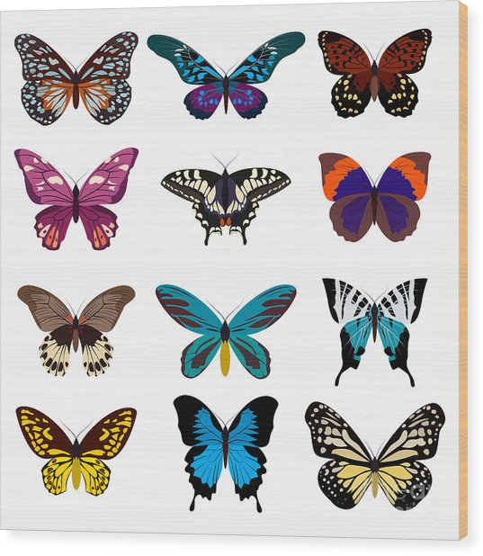 Big Collection Butterfly Of Colorful Wood Print