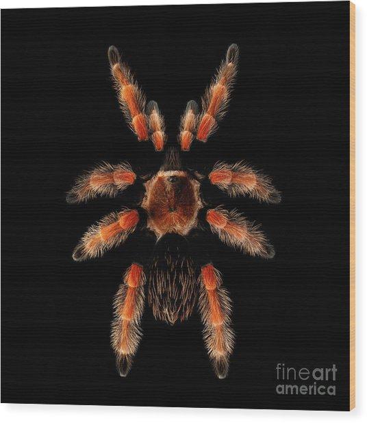 Big Spider Brachypelma Boehmei Wood Print