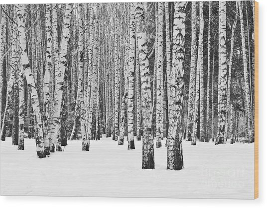Birch Forest In Winter In Black And Wood Print